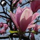 Buy Purple Lily Magnolia Tree Seeds 50pcs Plant Mchella Liliflora Zi Yu Lan