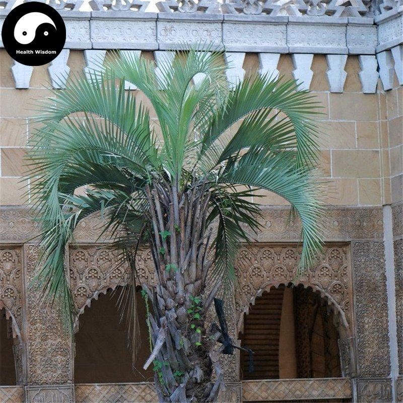 Buy Butia Capitata Tree Seeds 6pcs Plant Chinese Butia Capitata Bu Di Ye Zi