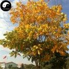 Buy Sapindus Tree Seeds 32pcs Plant Chinese Sapindus Mukurossi Gaertn Wu Huan Zi