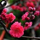 Buy Winter Sweet Prunus Mume Tree Seeds 60pcs Plant Red Plum Blossom La Mei