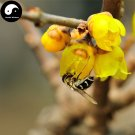 Buy Winter Sweet Prunus Mume Tree Seeds 30pcs Plant Yellow Plum Blossom La Mei