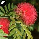 Buy Albizia Julibrissin Tree Seeds 120pcs Plant Silk Tree Siris Acacia Sponge