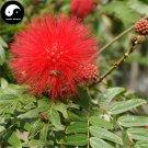 Buy Albizia Julibrissin Tree Seeds 30pcs Plant Silk Tree Siris Acacia Sponge