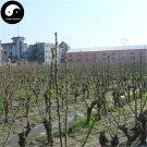 Buy Morus Alba Tree Seeds 200pcs Plant Mulberry Leaf For Silkworm Food Sang Shu