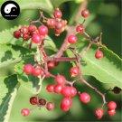 Buy Sambucus Williamsii Tree Seeds 60pcs Plant Williams Elder Tree Jie Gu Mu