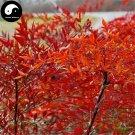 Buy Common Nandina Tree Seeds 240pcs Plant Nandina Domestica Nan Tian Zhu