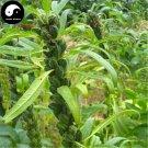 Buy Semen Sesami Nigrum Seeds 300pcs Plant Chinese Black Sesame Seed Hei Zhi Ma