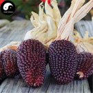Buy Berry Waxy Corn Seeds 240pcs Plant Chinese Sweet Zea Mays For Fruit Corn