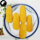 Buy Pineapple Waxy Corn Seeds 120pcs Plant Chinese Sweet Zea Mays For Fruit Corn