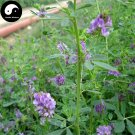 Buy Chinese Alfalfa Herb Seeds 1000pcs Plant Medicago Sativa For Forage Grass