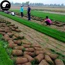 Buy Tall Fescue Grass Seeds 1000pcs Plant Evergreen Lawn Grass Festuca Ovina