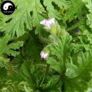 Buy Pelargonium Graveolens Seeds 400pcs Plant Herb Insect Repellent Grass