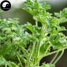 Buy Pelargonium Graveolens Seeds 200pcs Plant Herb Insect Repellent Grass