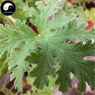 Buy Pelargonium Graveolens Seeds 100pcs Plant Herb Insect Repellent Grass