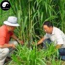 Buy Pennisetum Purpureum Seeds 500pcs Plant Forage Grass Sugarcane King Grass