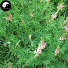 Buy Sainfoin Seeds 1000pcs Plant Forage Grass Red Bean Onobrychis Viciaefolia