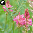 Buy Sainfoin Seeds 250pcs Plant Forage Grass Red Bean Onobrychis Viciaefolia