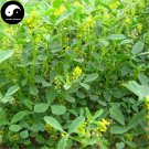 Buy Melilotus Officinalis Seeds 500pcs Plant Forage Grass Melilotus Grass