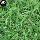 Buy Cynodon Dactylon Grass Seeds 500pcs Plant Garden Lawn Grass Cynodon