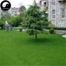 Buy Cynodon Dactylon Grass Seeds 2000pcs Plant Garden Lawn Grass Cynodon