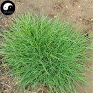 Buy Agrostis Matsumurae Grass Seeds 500pcs Plant Garden Lawn Grass Jian Gu Ying