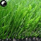 Buy Evergreen Grass Seeds 500pcs Plant Evergreen Garden Lawn Grass