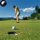 Buy Evergreen Golf Lawn Grass Seeds 1000pcs Plant Evergreen Garden Lawn Grass