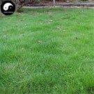 Buy Evergreen Zoysia Japonica Grass Seeds 500pcs Plant Manilagrass Lawn Grass