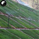 Buy Evergreen Zoysia Japonica Seeds 2000pcs Plant Slope Protection Lawn Grass