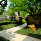 Buy Evergreen Grass Seeds 800pcs Plant Low Ophiopogon Japonicus Lawn Grass