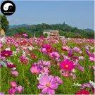 Buy Cosmos Bipinnata Flower Seeds 800pcs Plant Cosmos Flower For Family Garden