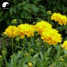 Buy Coreopsis Drummondii Flower Seeds 800pcs Plant Coreopsis Flower Garden