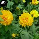 Buy Coreopsis Drummondii Flower Seeds 400pcs Plant Coreopsis Flower Garden