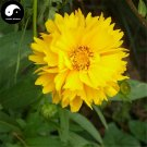 Buy Coreopsis Drummondii Flower Seeds 200pcs Plant Coreopsis Flower Garden