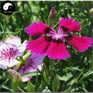 Buy Multicolored Carnation Flower Seeds 400pcs Plant Dianthus Barbatus Flower