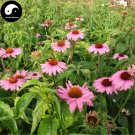 Buy Echinacea Flower Seeds 800pcs Plant Garden Echinacea Purpurea Flowers