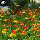 Buy Field Poppy Flower Seeds 400pcs Plant Papaver Rhoeas Flowers Flanders Poppy