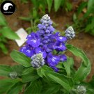 Buy Salvia japonica Flower Seeds 100pcs Plant Blue Flowers Sage Garden