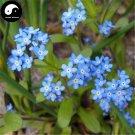 Buy Myosotis Sylvatica Flower Seeds 400pcs Plant Flowers Forget Me Not Garden