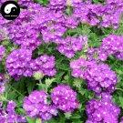 Buy Verbena Hybrida Flower Seeds 200pcs Plant Chinese Verbena Flower Garden