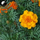 Buy Tagetes Patula Flower Seeds 120pcs Plant Garden Flower Tagetes Patula
