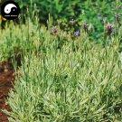 Buy Lavender Flower Seeds 500pcs Plant Purple Flower Lavender Garden