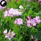 Buy Astragalus Sinicus Flower Seeds 150pcs Plant Purple Flower Astragalus