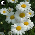 Buy Pyrethrum Flower Seeds 60pcs Plant Insect Repellent Flower Pyrethrum