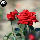 Buy Chinese Rose Tree Seeds 200pcs Plant Flower Red Rosa Rugosa