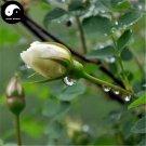Buy Chinese Rose Tree Seeds 200pcs Plant Flower White Rosa Rugosa