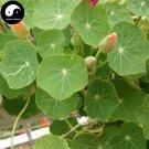 Buy Chinese Nasturtium Flower Seeds 30pcs Plant Flower Tropaeolum Majus