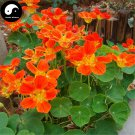 Buy Chinese Nasturtium Flower Seeds 120pcs Plant Flower Tropaeolum Majus