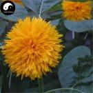 Buy Helianthus Annuus Flower Seeds 50pcs Plant Chinese Sunflower Helianthus