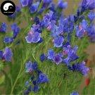 Buy Echium Vulgare Flower Seeds 400pcs Plant Blue Flower Garden Echium